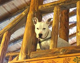 Pet-Friendly Cabin Rentals - Photo of a dog in the upstairs loft at the Possum Lodge Cabin.